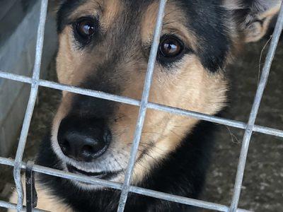 Vermittlung Hund Tierschutz