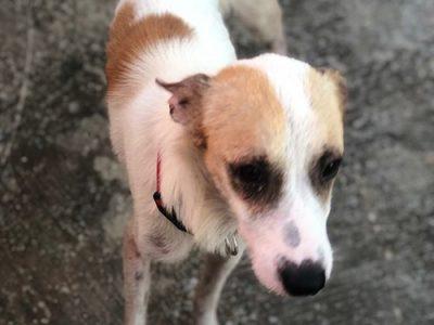 Hund aus Kuba adoptieren