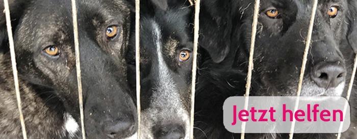 Hunderettung Europa Hunden helfen