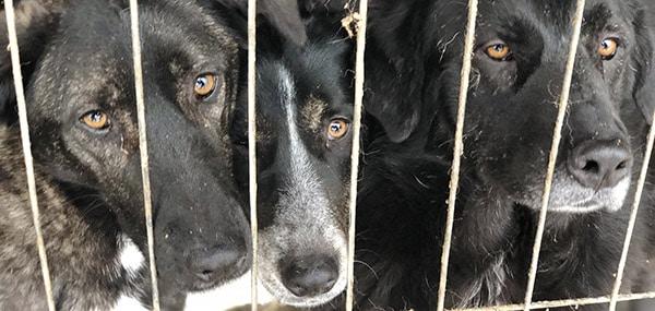 Tierschutzverein gründen