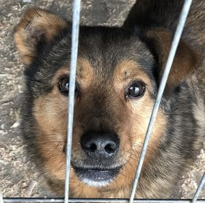 Hund adoptieren Tierschutz