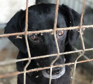Tierheimhund Patenschaft