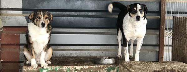 Tierheimhund Pate
