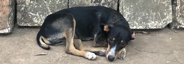 Hund auf Straße Kuba gefunden