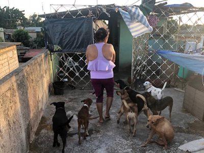 Auffangstation Hunde und Katzen Varadero Kuba