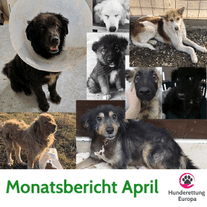 Monatsbericht April 2019