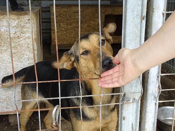 Tierschutzreise Rumänien