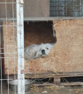 Hundhütte im Tierheim