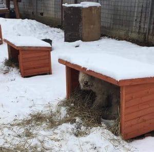 Hundehütten schützen die Hunde vor Kälte