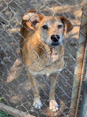 Bulgarische Hunde im Tierheim