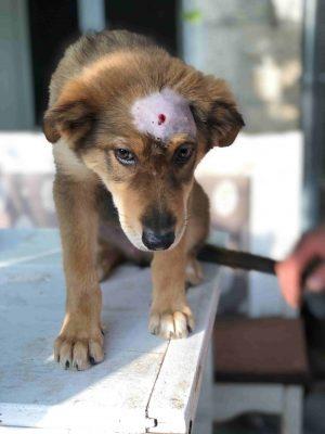 Unterstütze die Tierrettung in Bulgarien