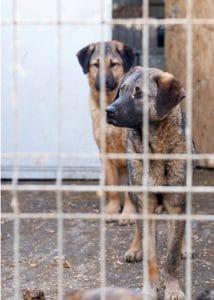 Notstand im rumänischen Tierheim.