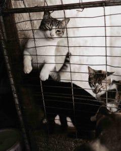 Katzen in Not auf Kuba