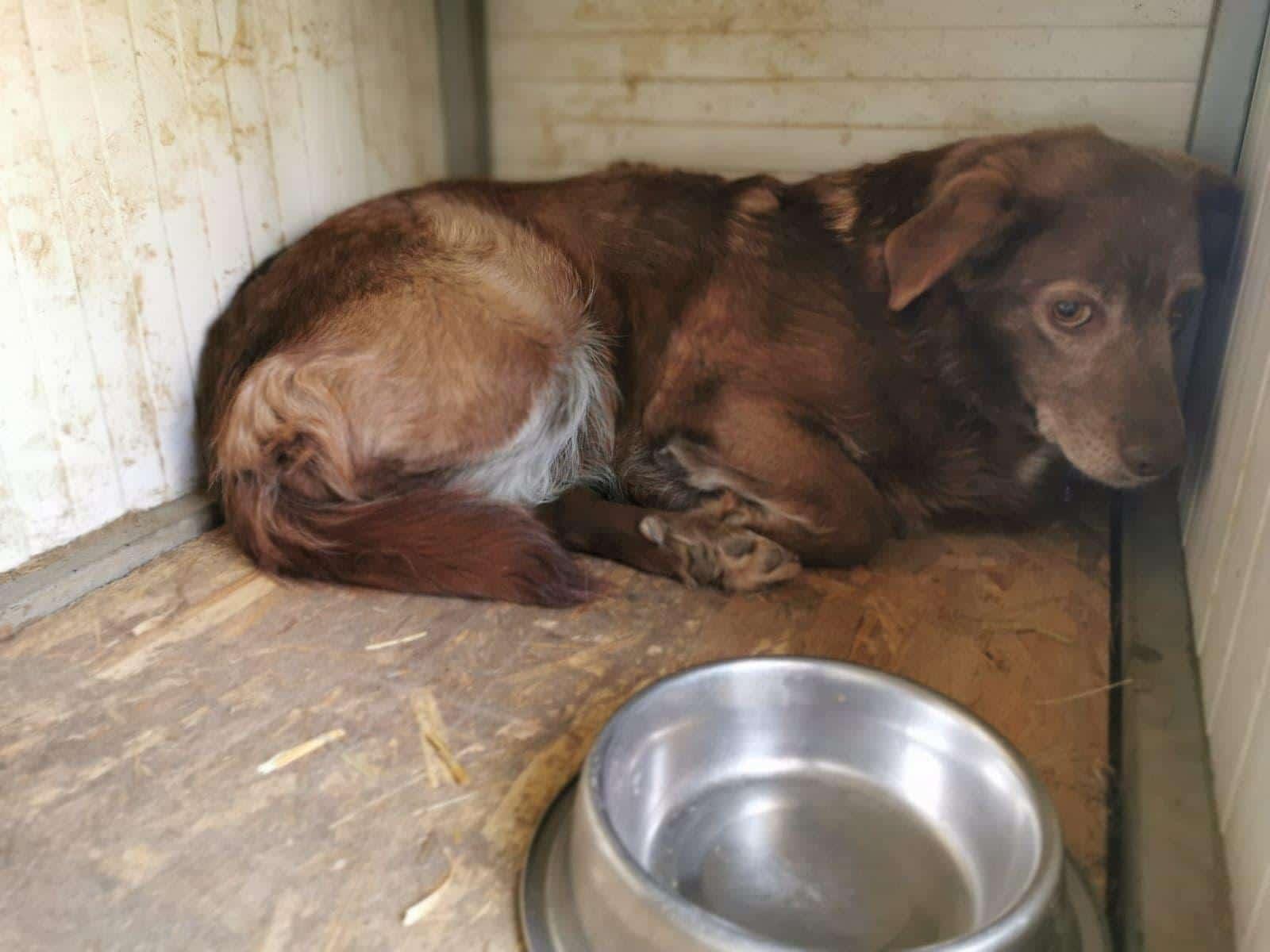 Corona-Krise trifft auch unsere rumänischen Tierheimhunde
