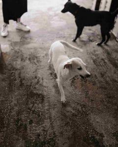 Tierschutz auf Kuba