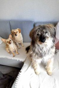 Gerda sitzt auf dem Sofa mit ihren zwei Hunde-Mitbewohnern.