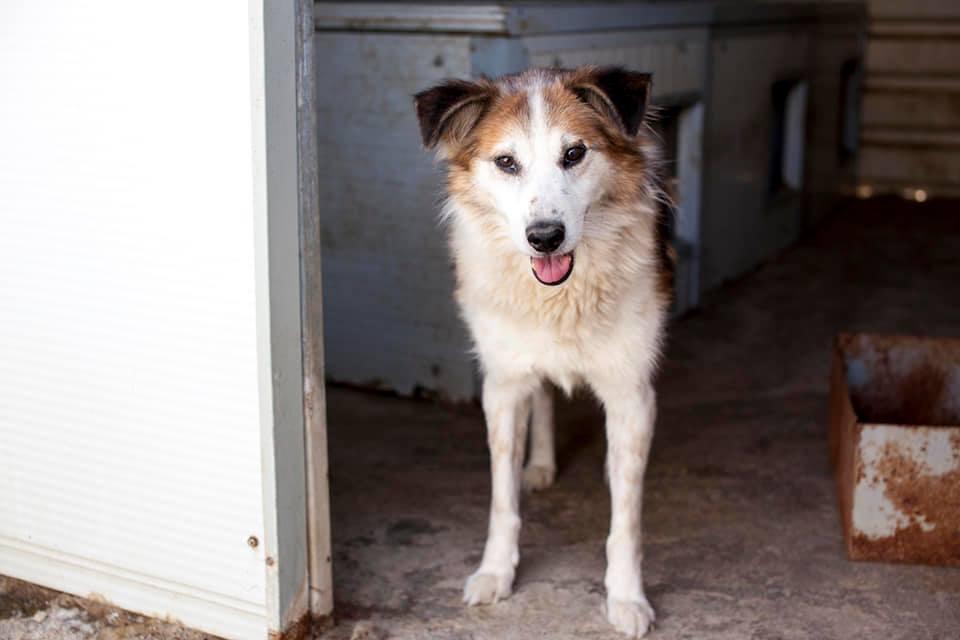 Leo steht im Eingang zu seiner Hütte.