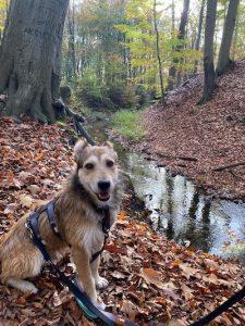 Struppig sitzt an einem Bach im Wald.