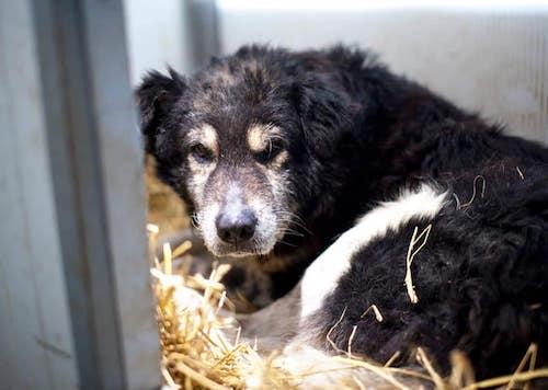 Senior Darios schaut traurig und ängstlich aus seiner Hundehütte