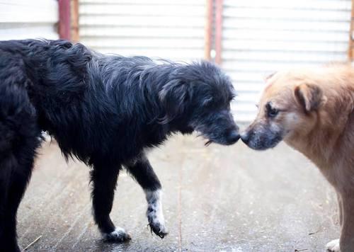 Hunde beschnuppern sich
